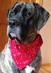 Giant Summer Fall Collection Through the Collar Bandanas Buy 5 Get 1 FREE