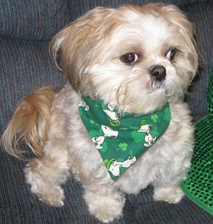 Small Winter Spring Collection Through the Collar Bandanas Buy 5 Get 1 Free