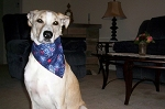 Large Winter Spring Collection Through the Collar Bandana Buy 5 Get 1 Free