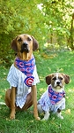 Cubs Through the Collar Bandana